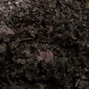 nelle foglie photo V. Pavani
